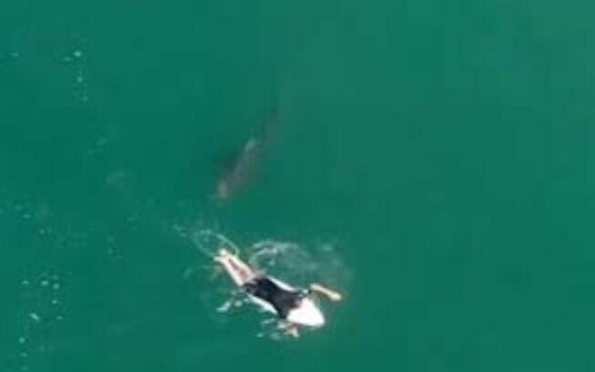 Surfista escapa de tubarão