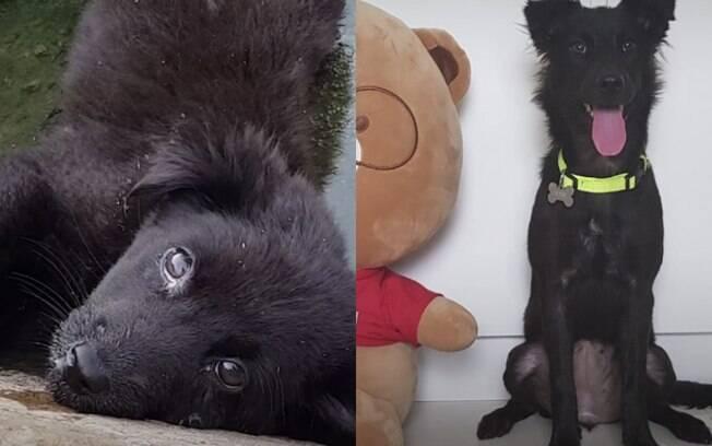 Antes e depois de cachorra encontrada em ralo surpreende