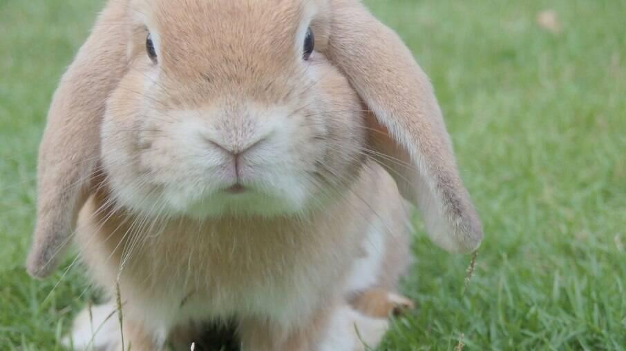 Coelhinhos fofinhos