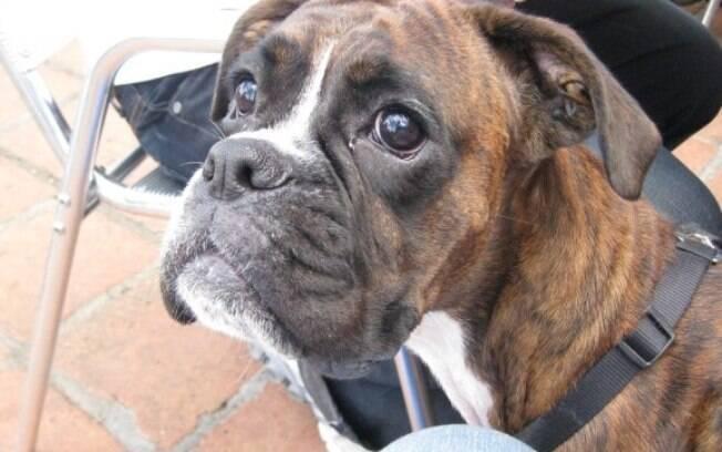 O cachorro de Leanne North morreu recentemente