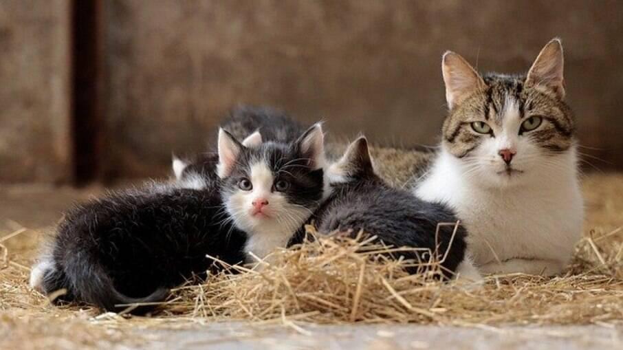 É um hábito natural que os felinos aprendem desde que nascem