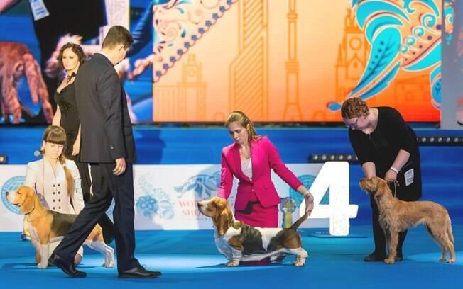 Se você tem a intenção de inscrever seu companheiro no concurso de beleza canino, é preciso ter em mente que o cachorro deve ser de raça e pertencer a algumas das reconhecidas pela FCI