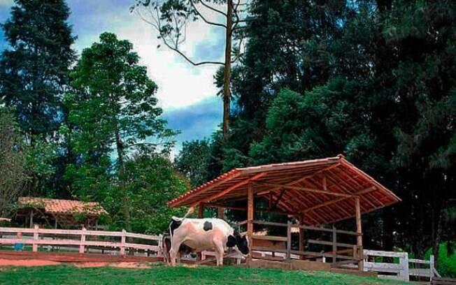 Na Bicho Mania Parque Fazenda, os visitantes tem um contato intenso com a natureza