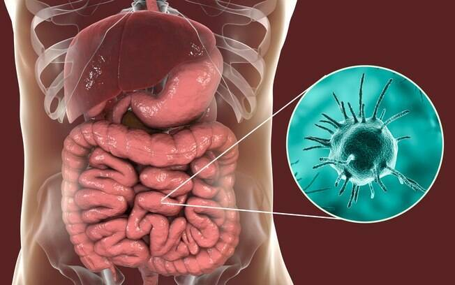 O novo parasita manifesta-se de maneira semelhante ao causador da leishmaniose visceral, mas não é da mesma família