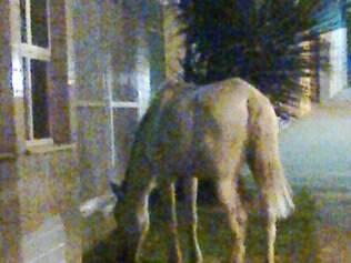 Cavalo é flagrado passeando pela avenida Mário Werneck