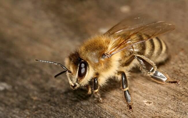 Além de matarem todas as abelhas de uma fazenda, os dois meninos causaram prejuízo de R$ 240 mil aos donos