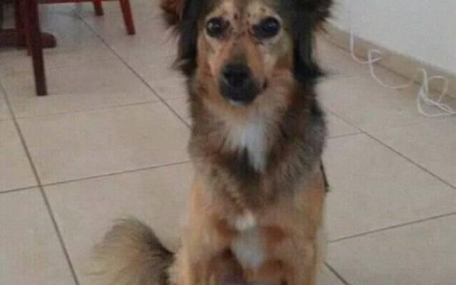 Kyra foi encontrada num esgoto coberta com óleo, foi adotada e tratada com muito amor e carinho.
