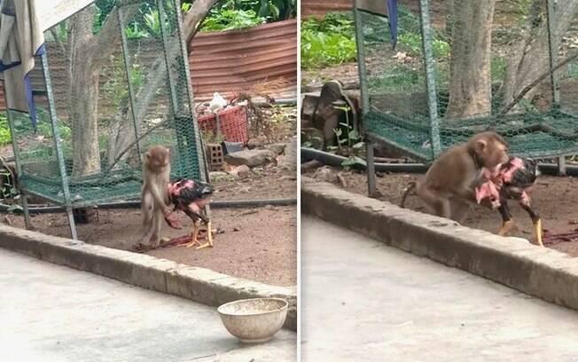 Animais foram flagrados durante o