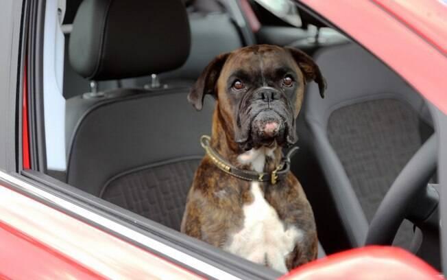 Cão Gerty no banco do motorista do Vauxhall Corsa