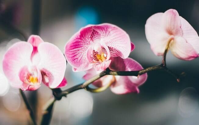 Embora exija cuidados bem específicos, as orquídeas deixam qualquer jardim perfeito, segundo Bruno Esperança