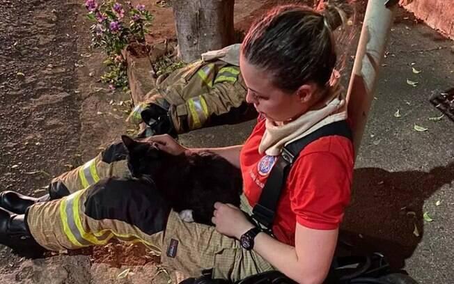 Gato de estimação da vítima foi encontrado com vida e deixado sob os cuidados de vizinhos
