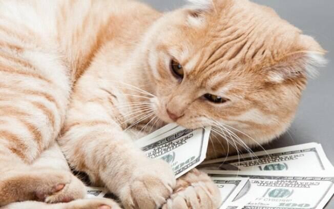 Gatos ricos: Troy e Tiger são agora dois gatos que terão uma fortuna de herança para gastar em ração e brinquedinhos