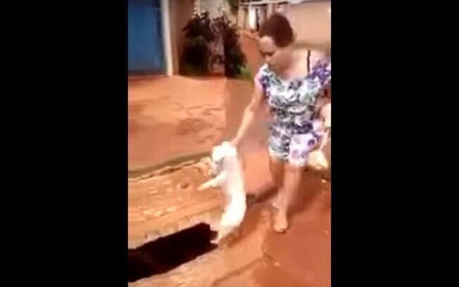Confira a história por trás do vídeo de cachorro jogado no bueiro que chocou a web