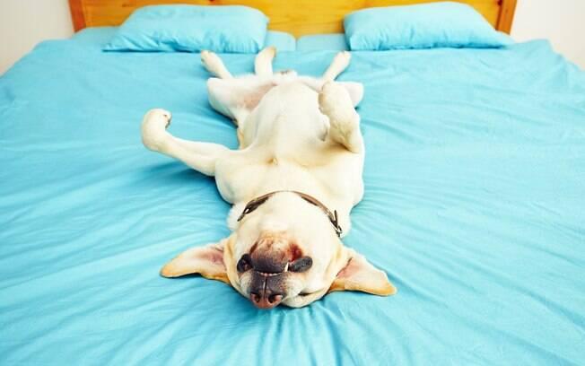 Durante um ataque epilético, o animal perde a consciência, cai de lado e os movimentos involuntários começam