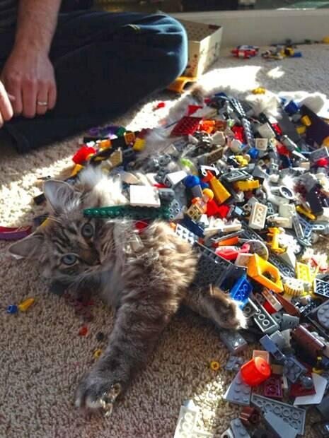 É isso que acontece quando deixamos crianças sozinhas com animais