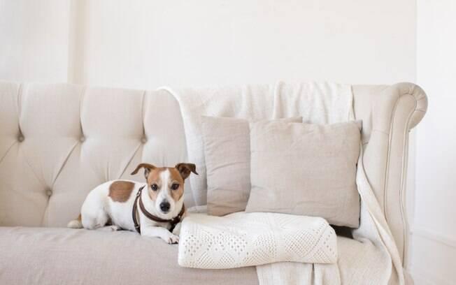 Capas ou mantas também são ótimas soluções para manter sofás e poltronas como novos