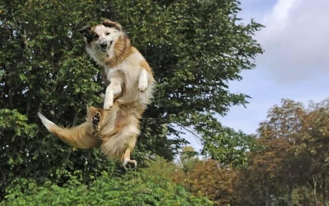 O bem-estar do animal é importante para o sucesso da empreitada; não esqueça de água e descanso