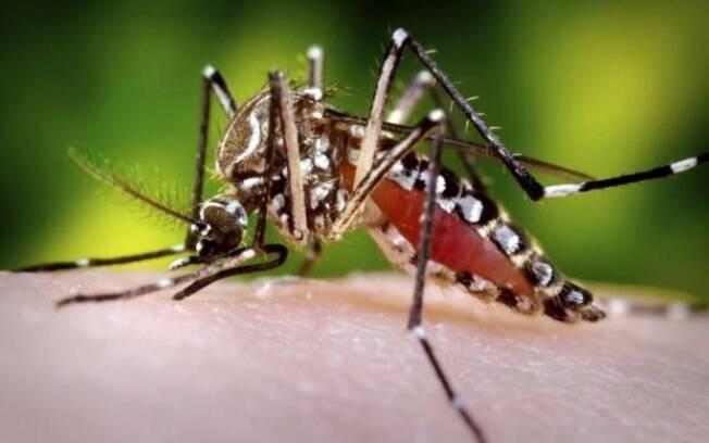 Casos prováveis de dengue aumentaram no Brasil