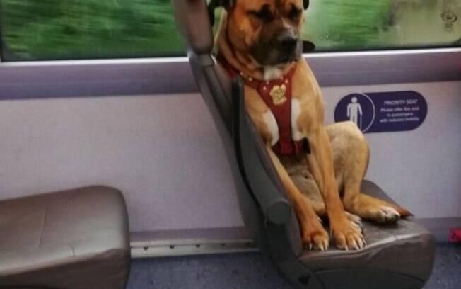 A cadelinha embarcou sozinha. Com feições tristes, comoveu a mídia para localizar seu dono, sem sucesso.