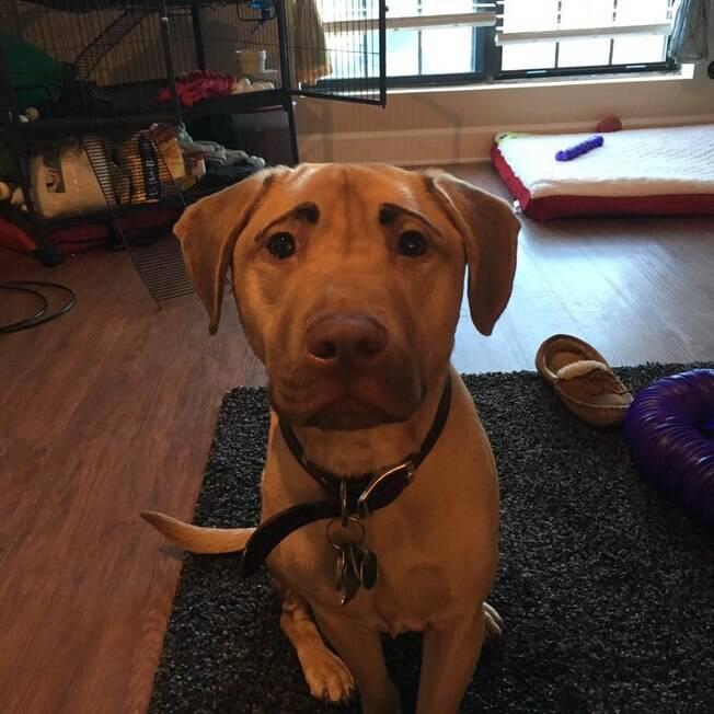 Cão de Taylor Schultz com sobrancelha