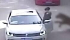 Mulher é atacada e comida viva por tigre em safari na China