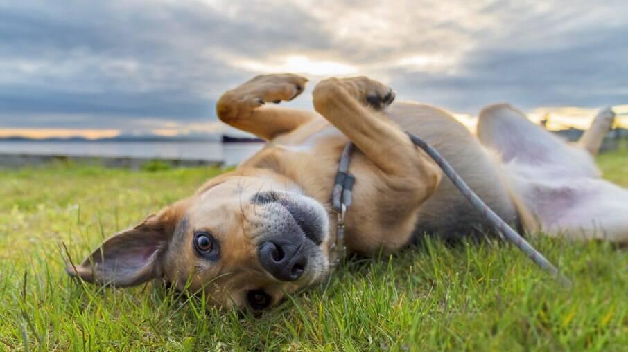 Pulgas e carrapatos estão presentes também no ambiente em que o pet vive