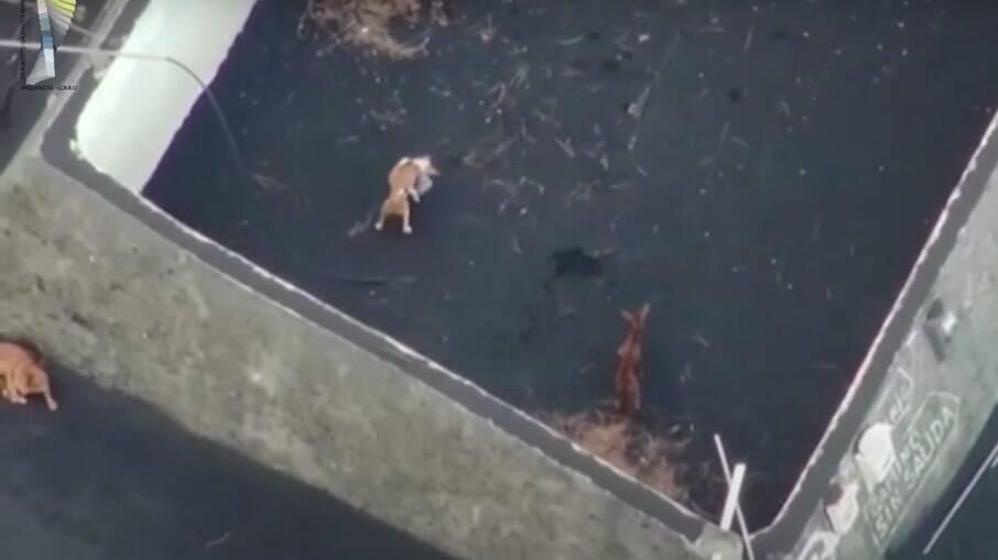 Os animais estão sendo monitorados por meio drones