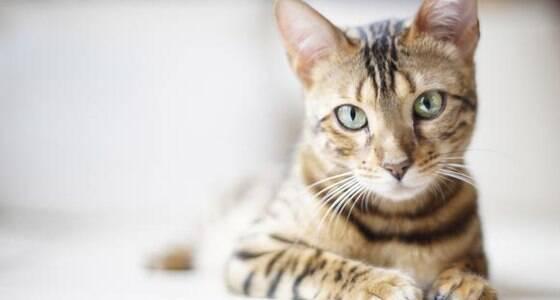 15 dicas essenciais de cuidados com gatos