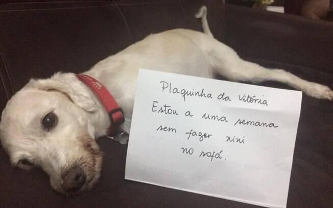 Esse cachorro recebeu uma plaquinha do orgulho por não fazer xixi no sofá.
