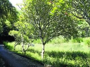 Meio ambiente. A mata do Planalto ocupa uma área de cerca de 120 mil m² e tem cerca de 20 nascentes que alimentam o rio das Velhas