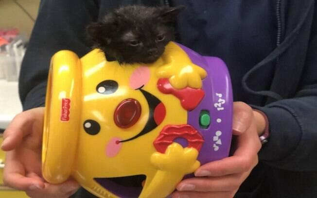 Gatinha fica com a cabeça presa em brinquedo e vai parar na emergência