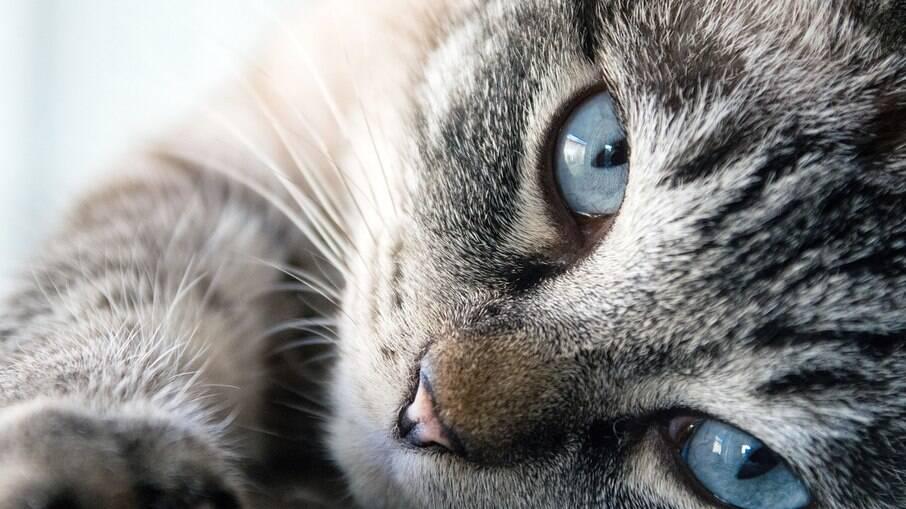Os bigodes dos gatos possuem funções muito importantes para a sobrevivência dos felinos
