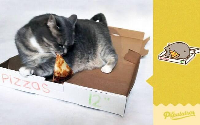 O gato que adora pizza.
