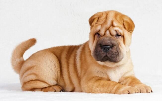 Conheça as raças de cachorro mais medrosas de todas