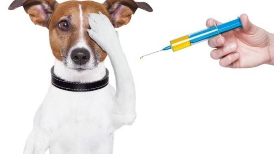 Aplicar as vacinas necessárias no cachorro é fundamental
