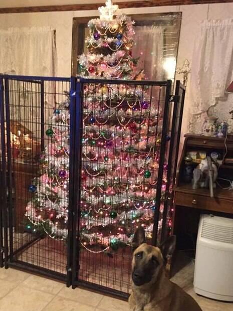 Proteja sua árvore de natal com essas dicas e seu pet nunca mais destruirá nada