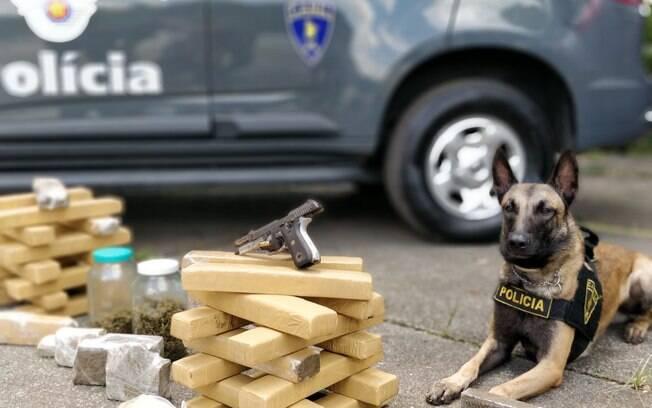 Cão Thor e droga apreendida na favela São Remo