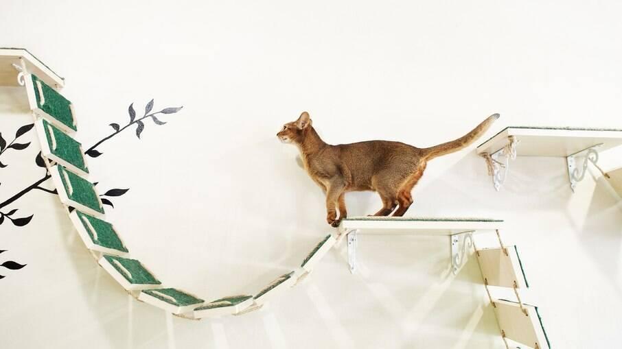 Prateleiras para o gato escalar fazem parte do enriquecimento ambiental para pets que vivem em apartamento