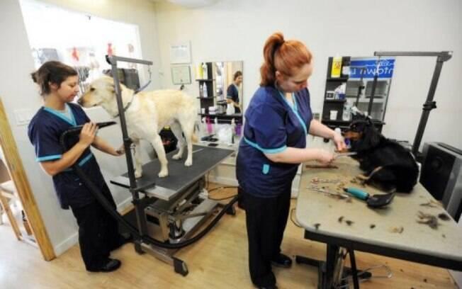Diante de tantos os tratamentos estéticos para cães, o serviços de banho e tosa viraram triviais