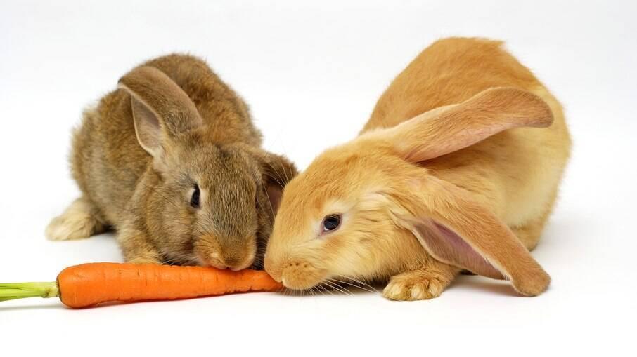 O coelho não gosta de cenoura da forma que foi apresentada pelo Pernalonga