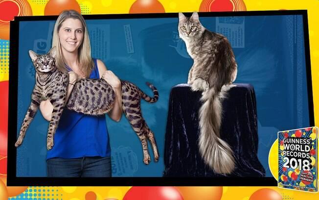 Dois gatos recordistas estão morando na mesma casa