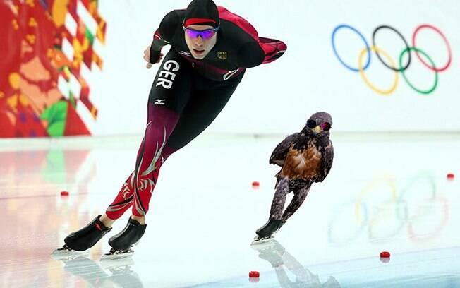 Falcão olímpico