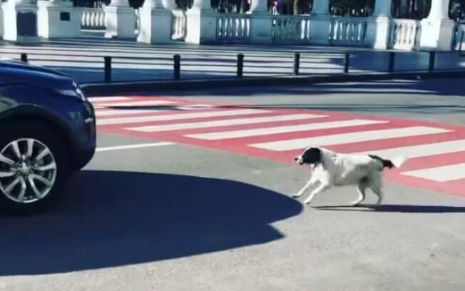 Cão parando trânsito para crianças atravessarem