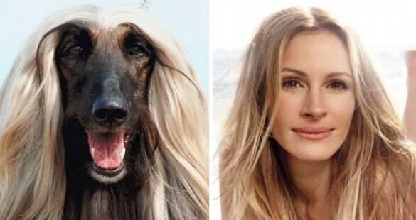 Morra de rir com esses cachorros que são a cara de famosos
