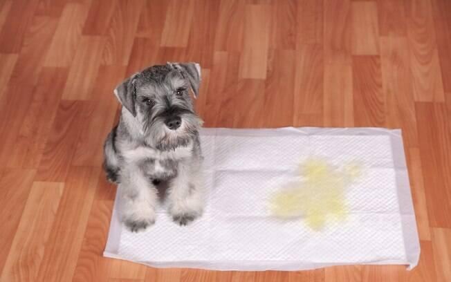 É importante que o tutor observe as fezes e urina do pet a fim de evitar possíveis doenças