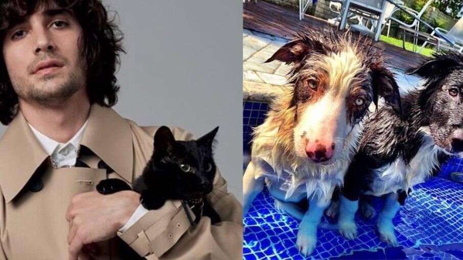 Além do gatinho Rock, o ator também possui dois cães, chamados Toth e Gaia