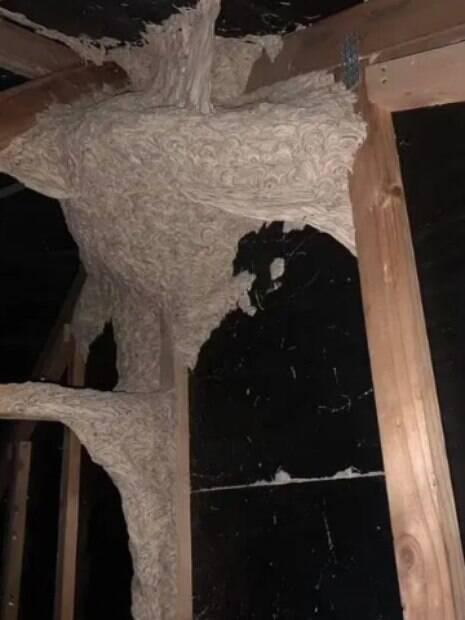ninho em sótão