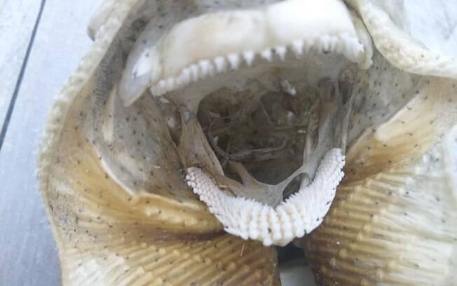 Fóssil encontrado em Canterbury foi comparado a um alienígena pela mulher que o encontrou; publicação viralizou