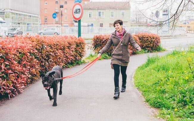 Com alguns truques e dicas passear com cachorro pode ficar mais agradável e divertido
