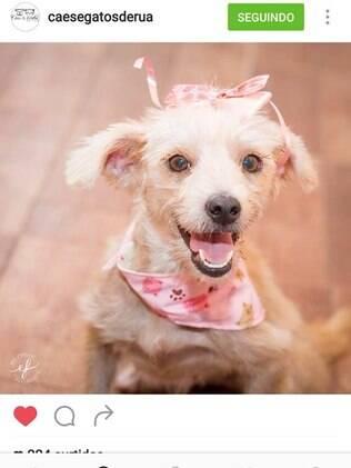Madonna, em pedido de adoção postado pela Ong Cães e Gatos de rua